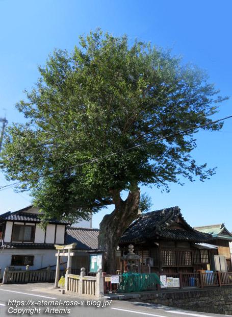 19.9.26.1 榎本神社  (6)