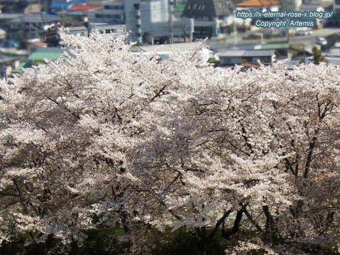 11.4.14.1 半田山植物園  (88)