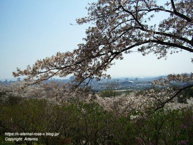 11.4.14.1 半田山植物園  (75)