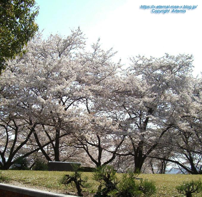 11.4.14.1 半田山植物園  (94)