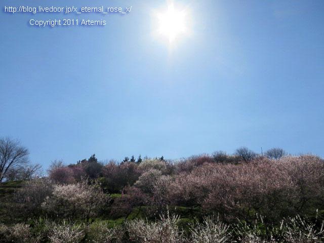 16.3.20.3 神代梅の里公園  (142)