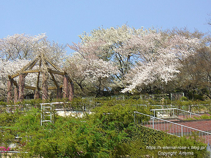 11.4.14.1 半田山植物園  (7)