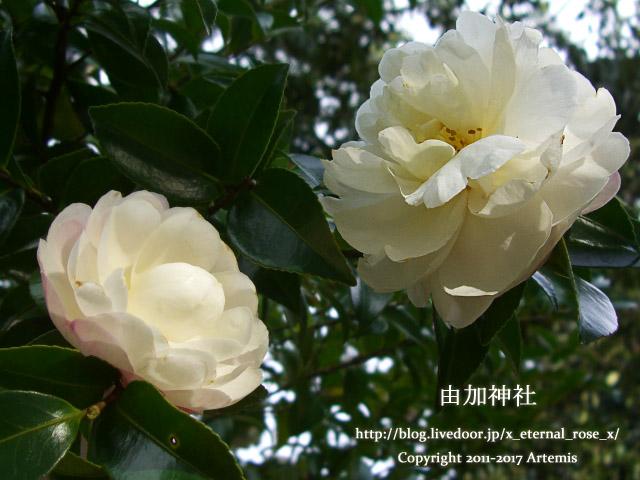 9 由加神社 和気  (12)