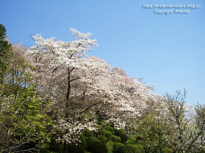 11.4.14.1 半田山植物園  (36)