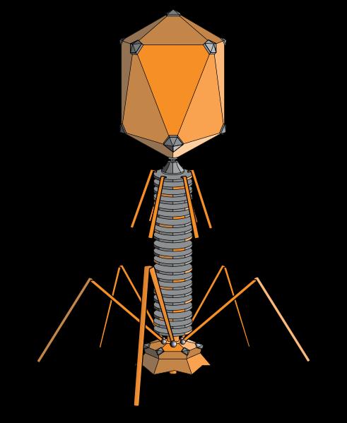 ウイルスと動物の共生関係:科学ニュースの森