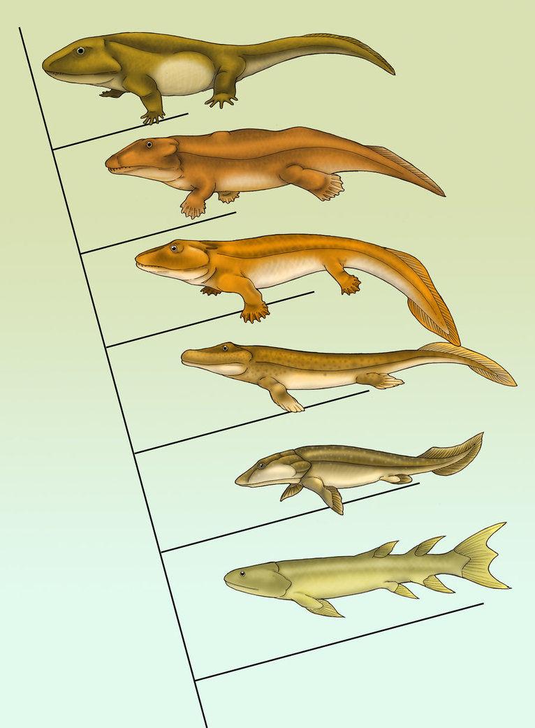 魚のヒレと陸上動物の四肢:科学...