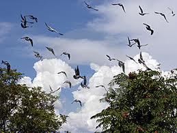 チェルノブイリの鳥は低レベル放射線に適応していることが判明:科学ニュースの森