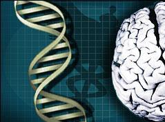 intelligence gene