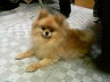 次郎(2006.10.17)