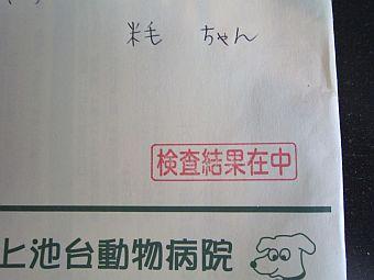 狂犬病予防注射済票