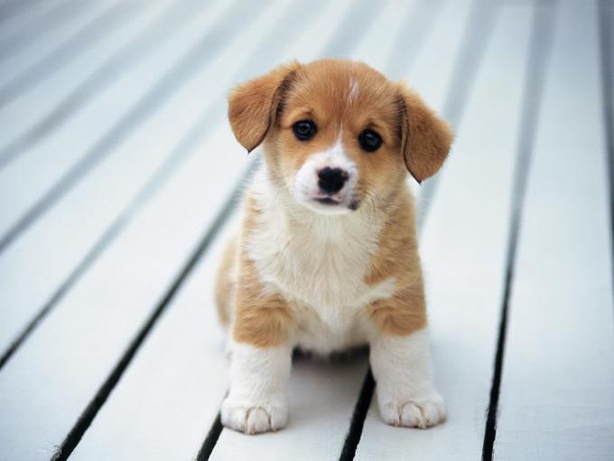 puppy_12