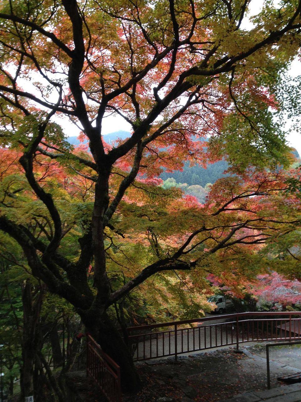 http://livedoor.blogimg.jp/xmatometestx/imgs/a/0/a0f6fbf1.jpg
