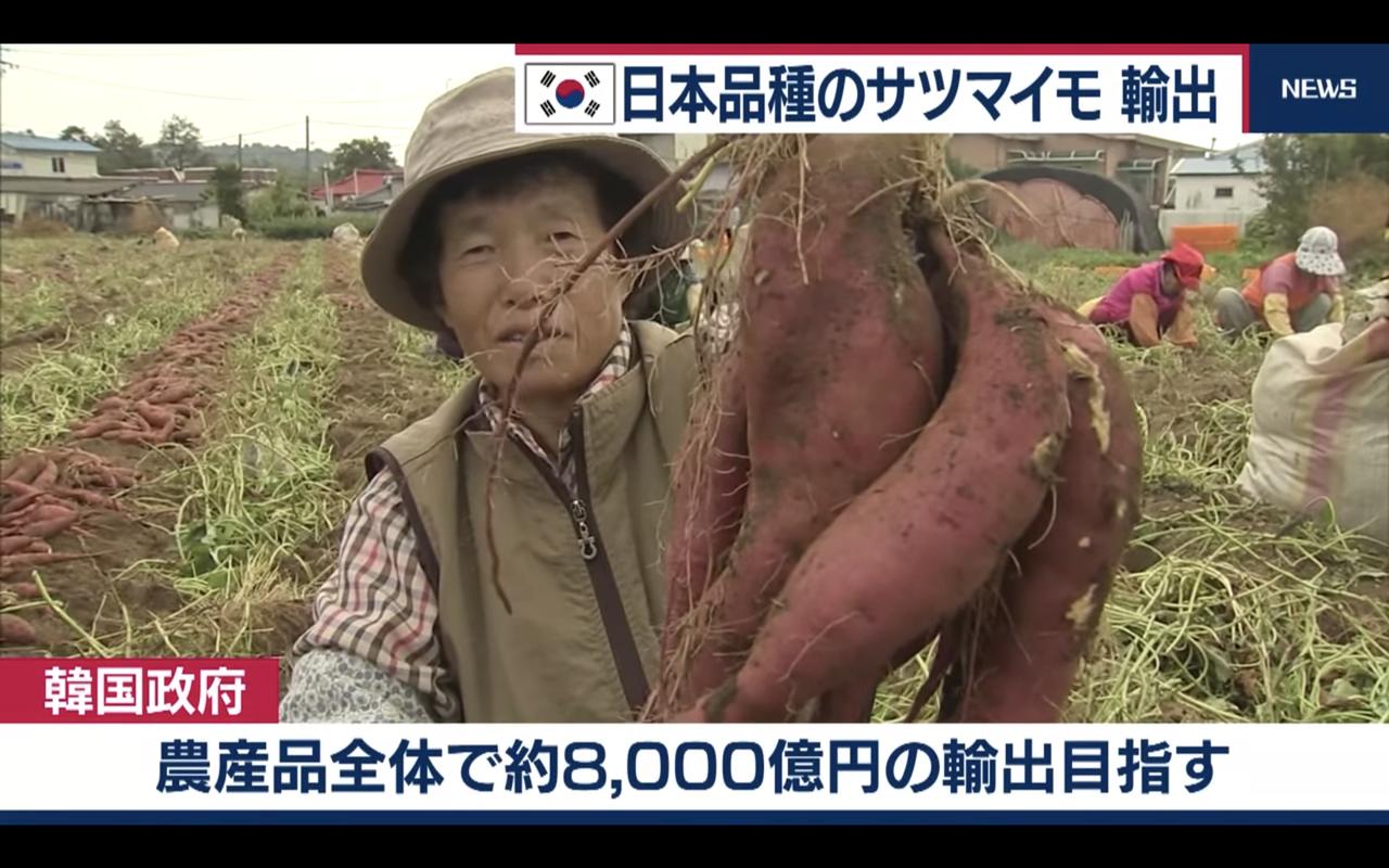 反応 アンテナ 海外 の 韓国
