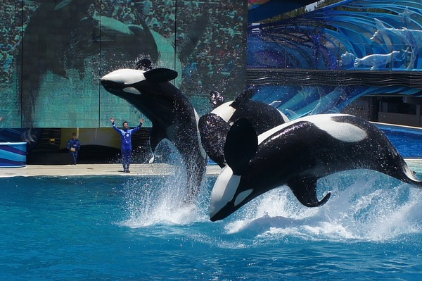 orca-732242_1280