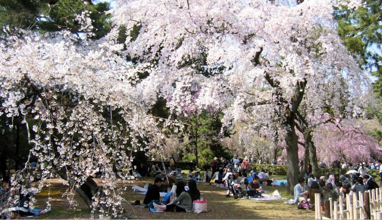 すべての折り紙 和風 折り紙 折り方 : 京都旧府庁本館と御所の桜》