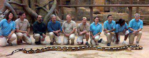 巨大ニシキヘビ写真06