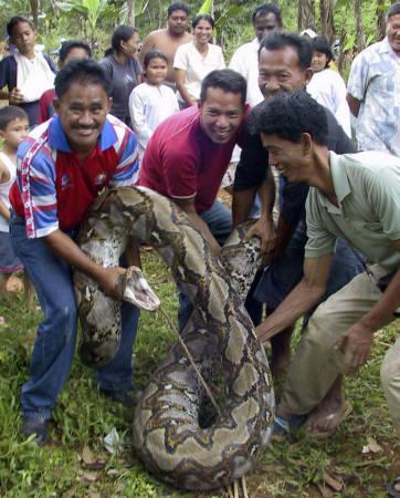 巨大ニシキヘビ写真08