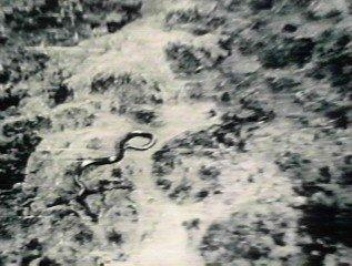 巨大ニシキヘビ写真18