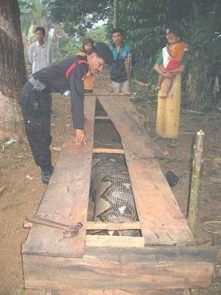 巨大ニシキヘビ写真09