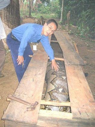 巨大ニシキヘビ写真19