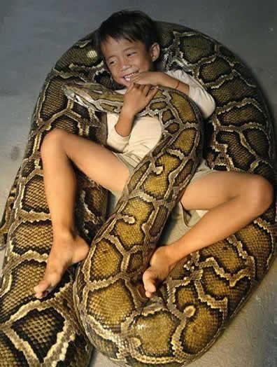 巨大ニシキヘビ写真04