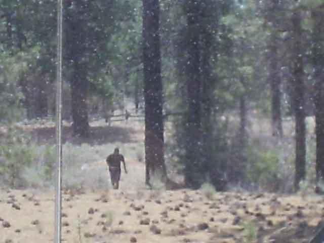 UMAビッグフット写真06 森から出てくるビッグフット。 ビッグフット アメリカの猿人UMA