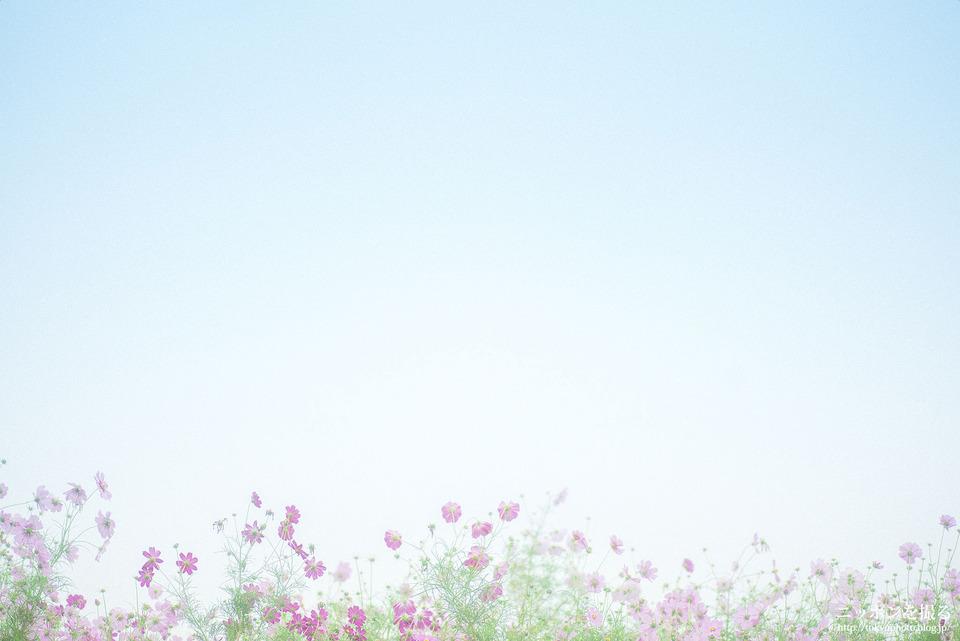 愛知県_名古屋市西区_庄内緑地公園_0056-2