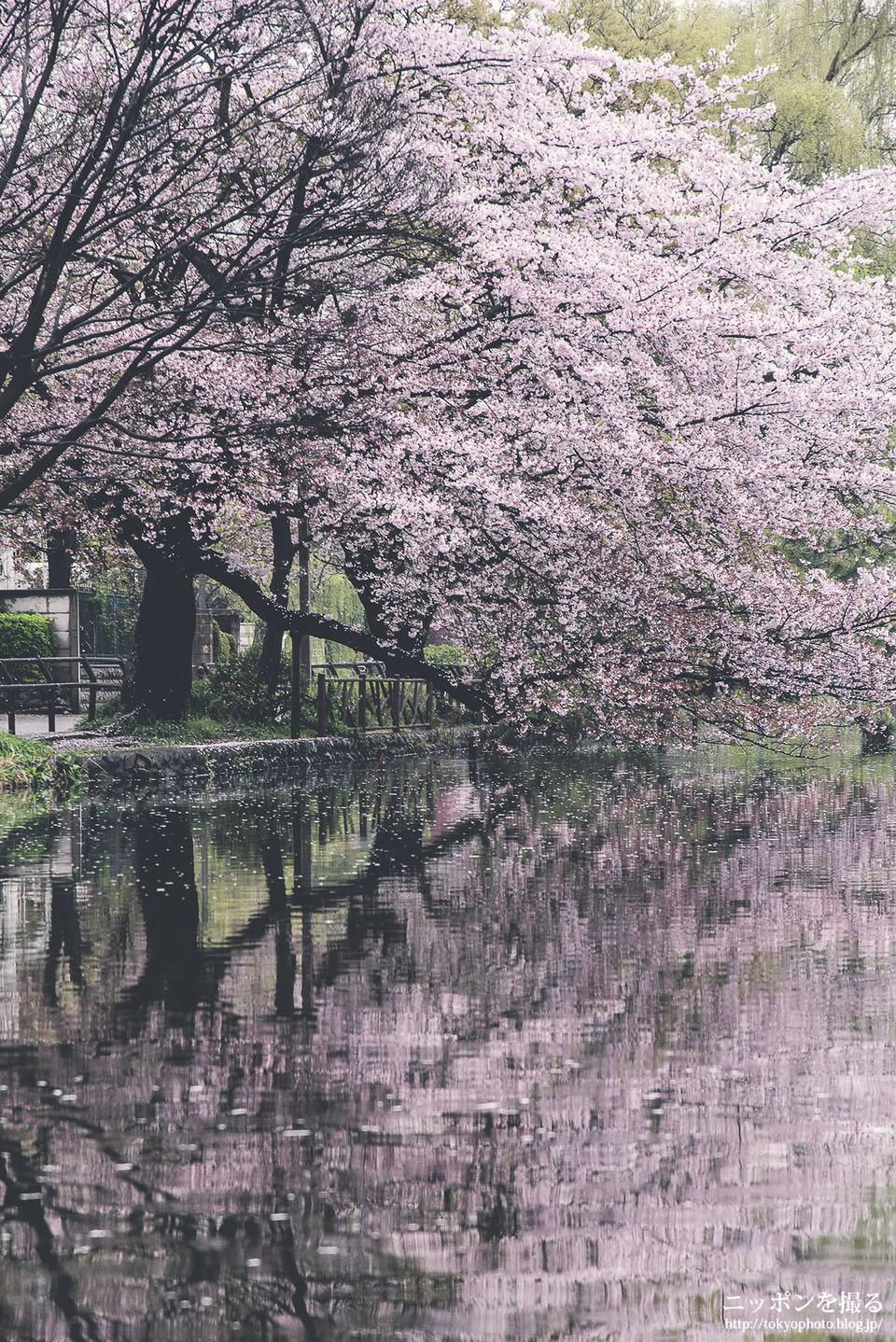石神井公園_01701