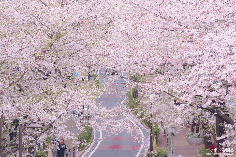 17_東京_渋谷区_桜坂