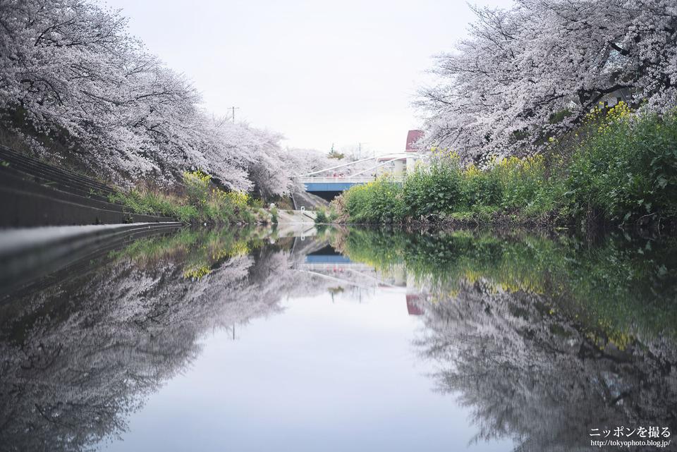 山崎川_0136