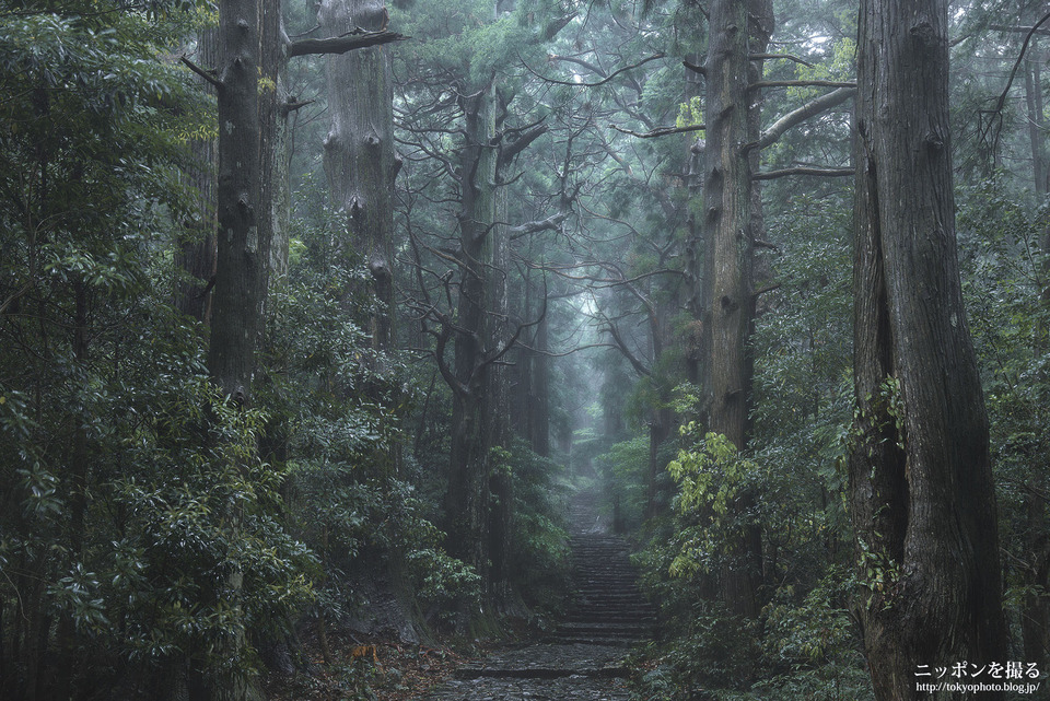 11_森は雨が降っていると神秘感が増す