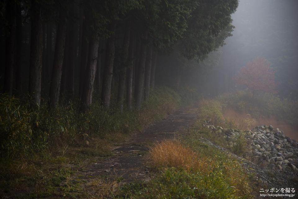 三重県_大紀町_0287