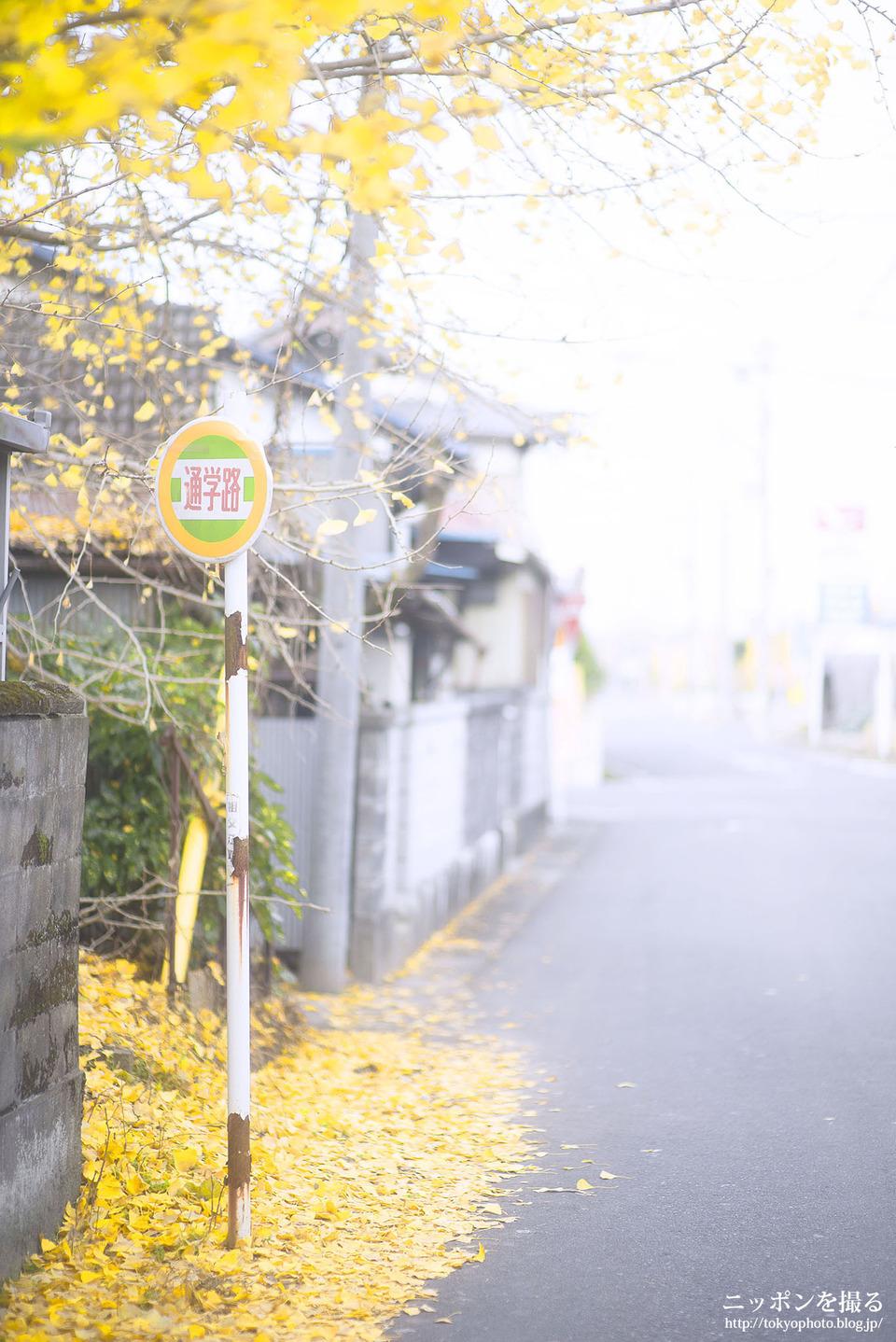 愛知県_稲沢市_祖父江_181202_0141