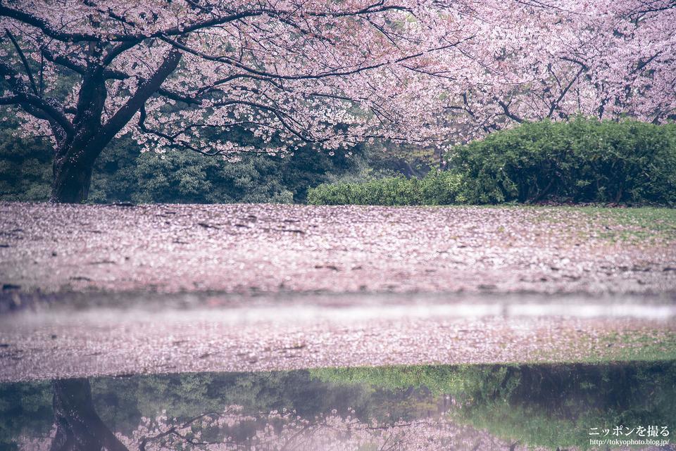 47_東京_練馬区_光が丘公園