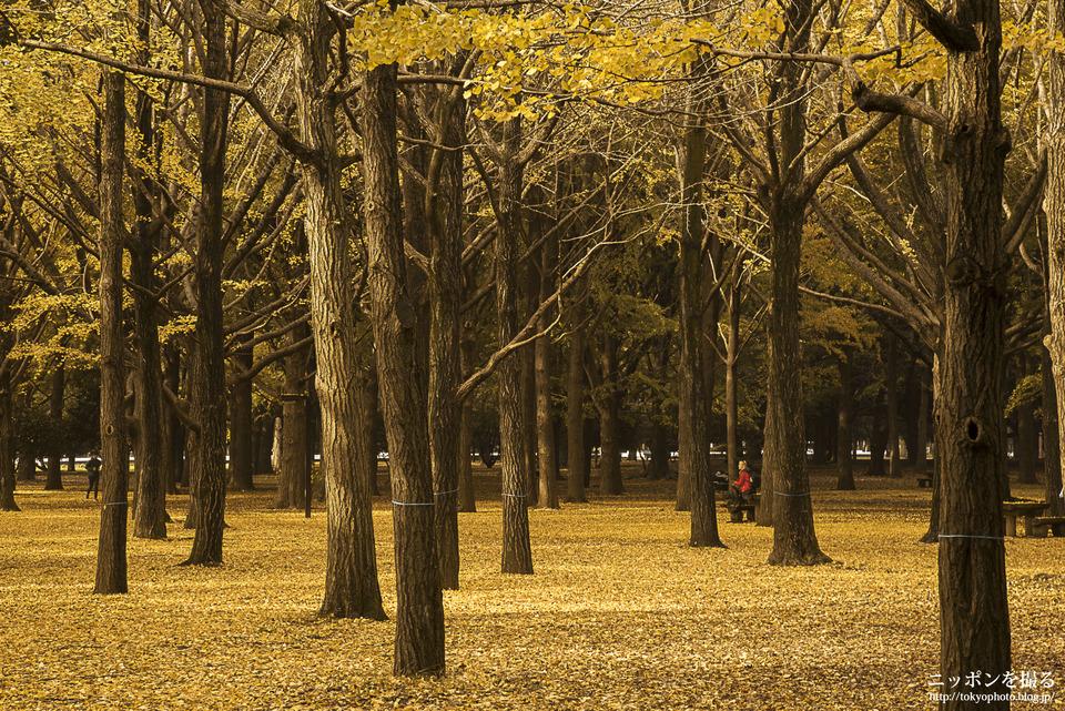 代々木公園_0000