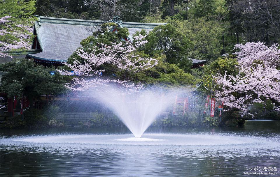 井の頭公園_0000