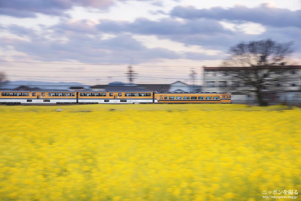 斎宮跡歴史ロマン広場_0221
