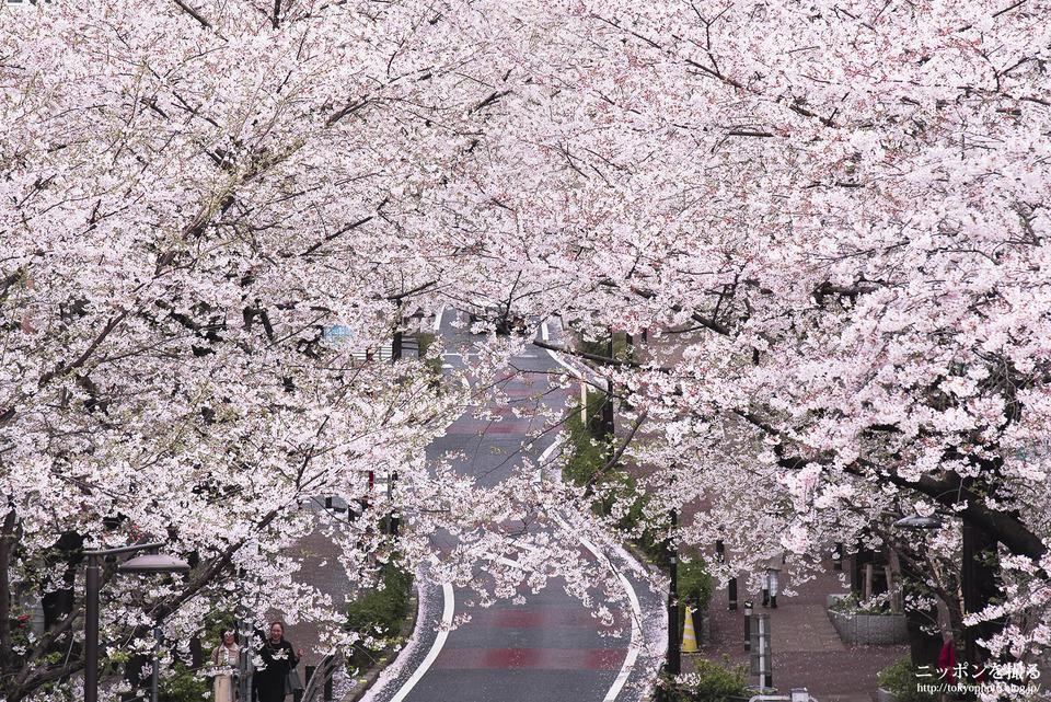 渋谷_160405_0085__桜坂_桜