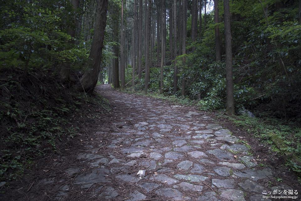 山中城跡と箱根旧街道_0037