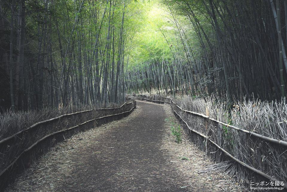 名古屋_大高緑地_竹林散策路