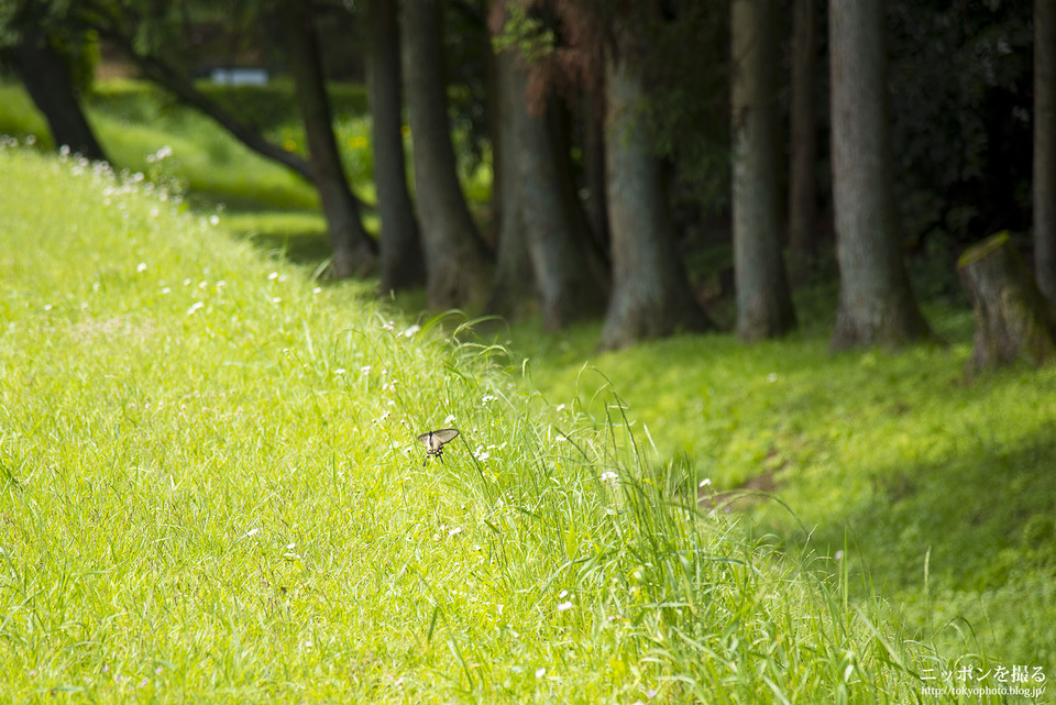 山中城跡と箱根旧街道_0119
