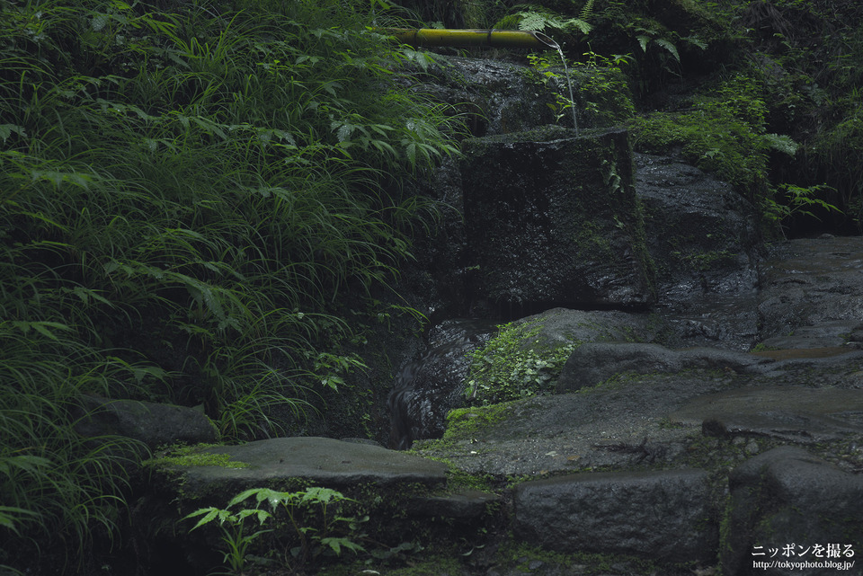 11-4_三重県_赤目四十八滝_陰陽滝の奥_0120