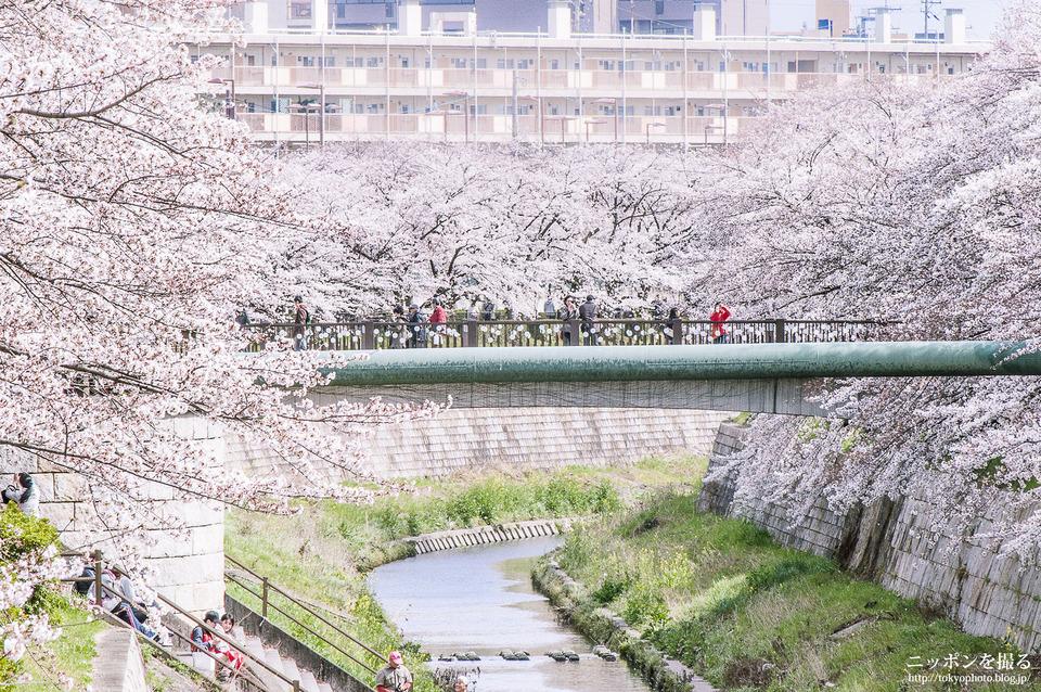 石川橋_0407