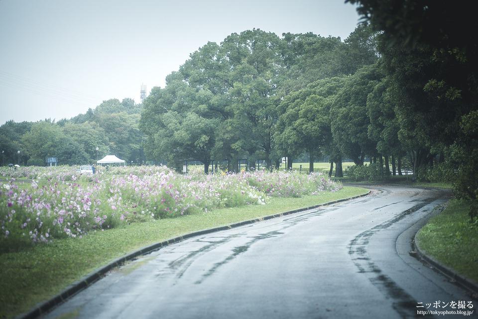 愛知県_名古屋市西区_庄内緑地公園_0069