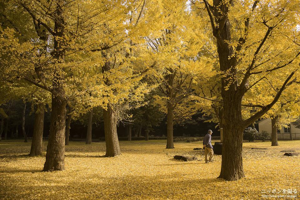 代々木公園_0001