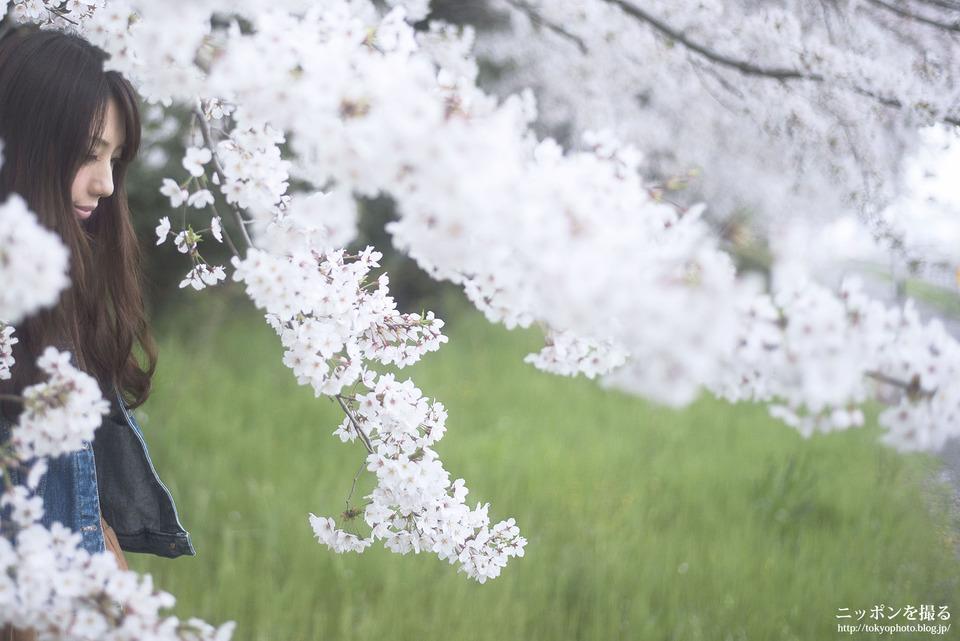 ポートレート_桜_0001