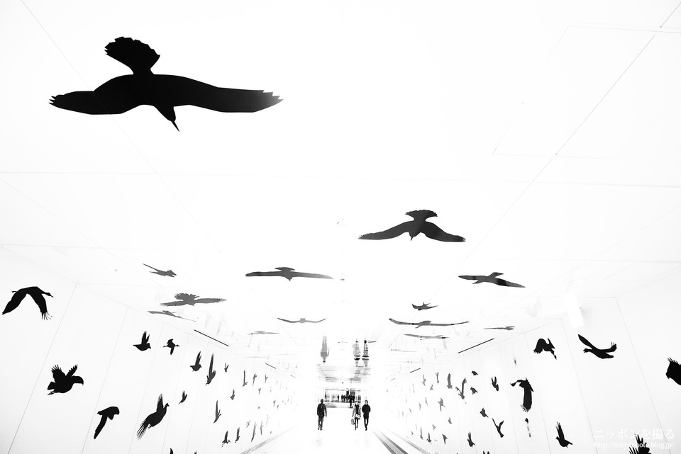 ルーセントアベニュー 鳥のシルエット