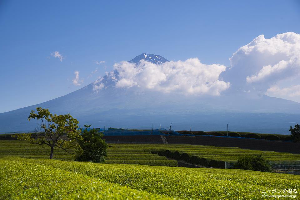 富士市の茶畑_0156
