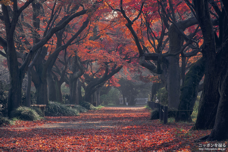 42_東京_文京区_小石川植物園