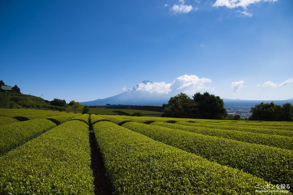 富士市の茶畑_0157